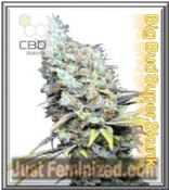 CBD Botanic Big Bud Super Skunk Cannabis Seeds Marijuana Strain